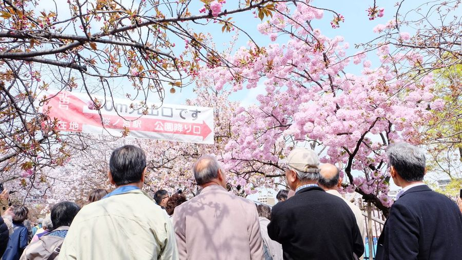 Large Group Of People Men Adult Day Tree Communication People Adults Only Women Crowd Only Men Real People Togetherness Protestor Outdoors Sky Cherry Blossoms Osaka Mint Museum Sakura2017 Osaka,Japan Old People