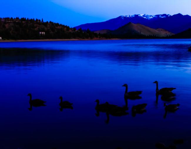 Lake Shastina C.a Diamond Mafia Photography Northern California Lake Nature Vibrant Colors Water Fishing Beatiful Nature Mountains Landscape Animals Geese