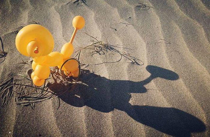 お散歩 バルーン バルーンアート 風船 プードル 犬 砂浜 海 芸術 アート 影 冬 Balloon Balloonart Poodle Dog Winter Shadow Sea Art 写真 Photo Showcase: January