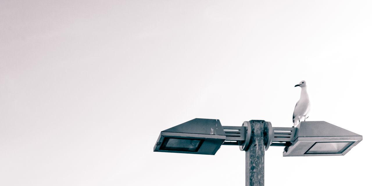 Artistic Black & White Calm Clear Sky EyeEm Nature Lover EyeEm Gallery Fine Art Photography Light Minimalist Art Artistic Photo Bird Birds Black And White Black And White Photography Black&white Blackandwhite Blackandwhite Photography Eye4photography  Fine Art Fineart_photobw Light And Shadow Minimal Minimalism Minimalistic