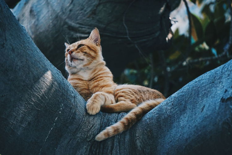 Low angle view of cat lying on branch