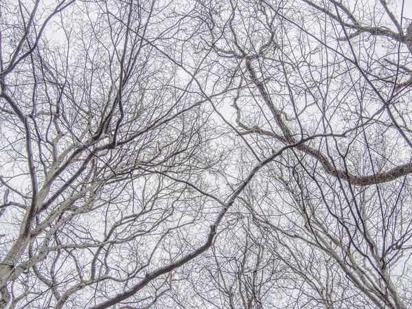 Background Dobogókő Forest Hungary Mystery Nature Outdoors Tree Treeart Winter