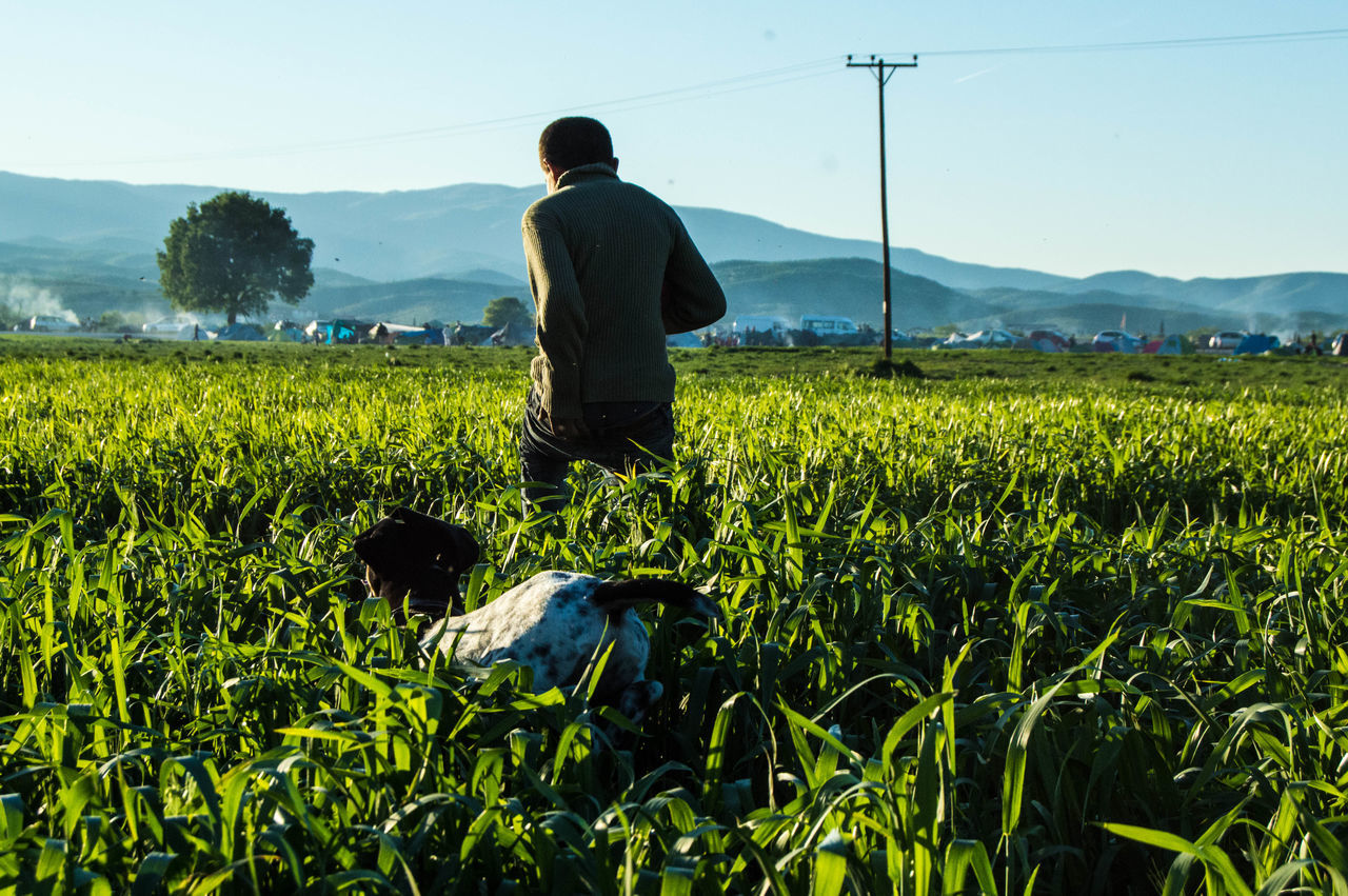 Rear View Of Man With Dog On Agricultural Field