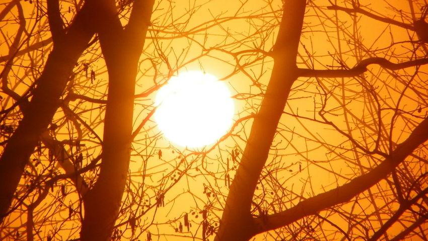 Trees And Sky Kodak Polska Poland Podkarpacie Kodak Easyshare EyeEm Best Shots EyeEm Bez Retuszu No Retouch Eyeemphotography Sun Tree Sunrise Wschód Słońca No People Nature Beauty In Nature Scenics Sky Dramatic Sky