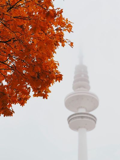 Fog Tree Architecture Plant Low Angle View Nature No People Sky Built Structure Change Autumn Tower Day Building Outdoors Orange Color