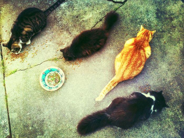 Four Cats Eating Cats Of EyeEm Cats Cat♡ Cat Lovers Catsofinstagram Catsagram Catoftheday Cat Animals Pets Pets Corner Feline Felines