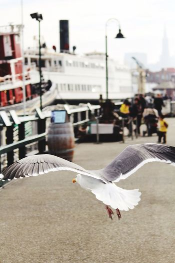 Must better fly away. Love To Travel Fisherman's Wharf Flying Seagull