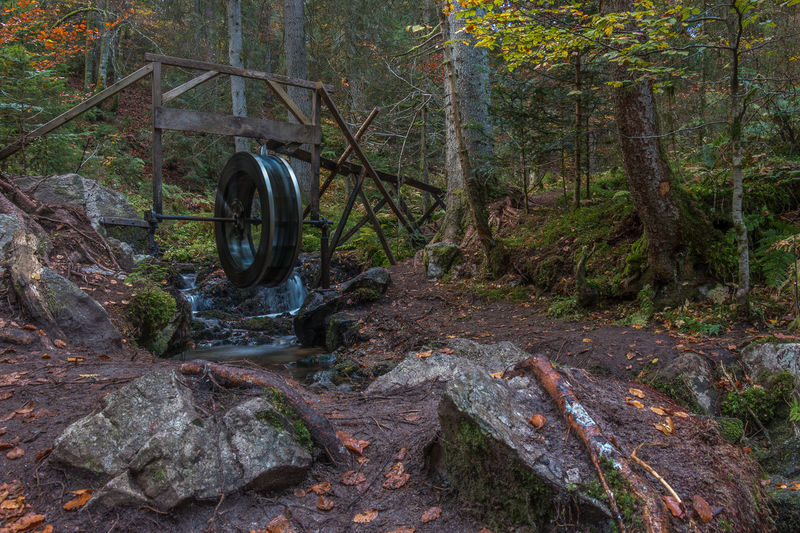 Zauberwald im Herbst Autumn Black Forest Forest Green Schwarzwald Tree WoodLand Zauberwald