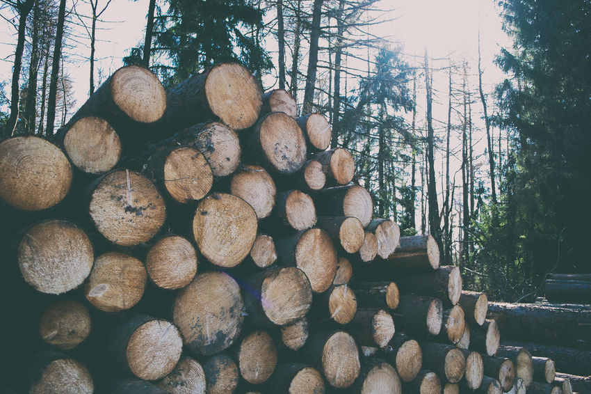 Woodpile Abundance Day Deforestation Environmental Issues Firewood Forest Fuel And Power Generation Land Large Group Of Objects Log Lumber Industry Nature No People Outdoors Plant Stack Timber Tree Wood Wood - Material WoodLand Woodpile