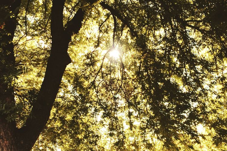 Trees Silhouette Sun Silhouette Sunlight Sunlight Silhouette Takenwithaniphone Taken & Edited With My IPhone Taken & Edited By Me Taken And Edited By Me Edited On EyeEm