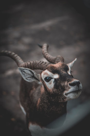 Close-up potrait of deer