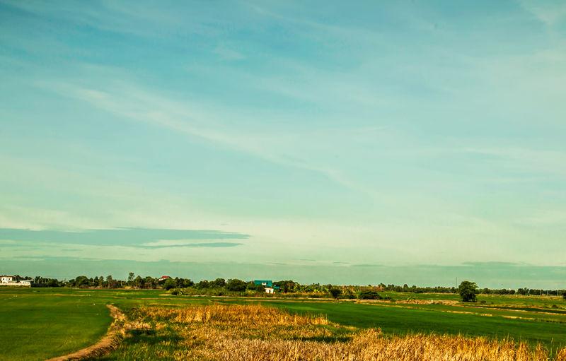 Sky and fields