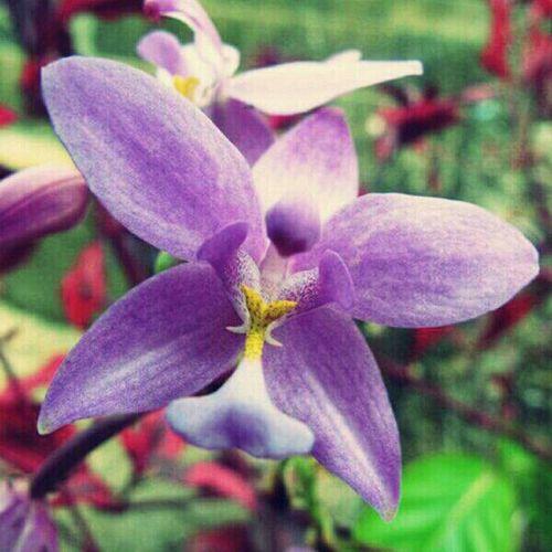 Flowers Colors Macro Purple Me O My O
