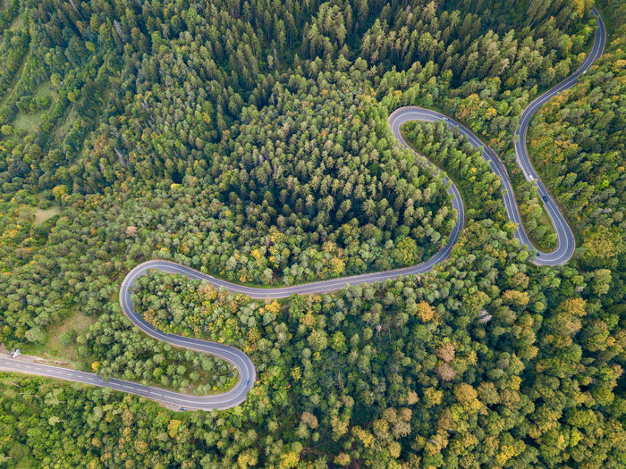 High angle view of plants by road in forest
