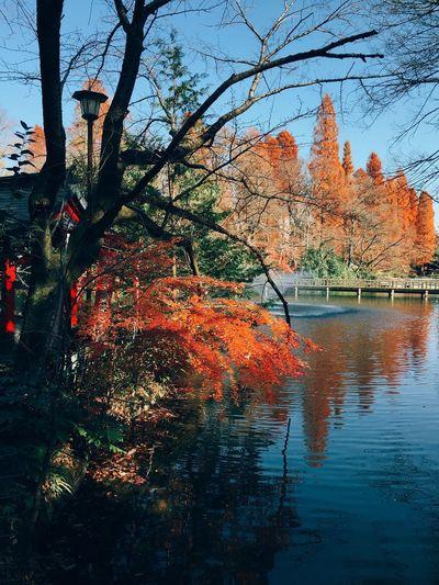 Tokyo,Japan Inokashira Park Autumn Tree Change Nature Water Beauty In Nature Leaf Outdoors Lake Day Sky