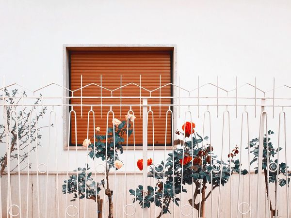 VSCO VSCO Cam Fuji X100t White Background Still Life StillLifePhotography Home Flowers Flower Composition Vscocam Vscogood Italy South Italia Minimalism Minimal Minimalist The Week On EyeEm The Architect - 2016 EyeEm Awards The Week On EyeEm Place Of Heart