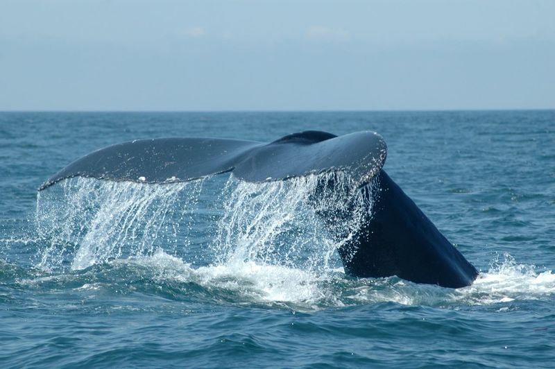Cropped image of whale swimming in sea