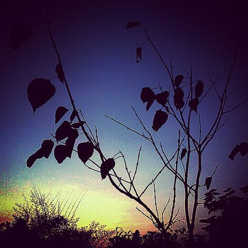 Sunset Leaves AtCollege PhotographyModeOn ThisTymFromGionee
