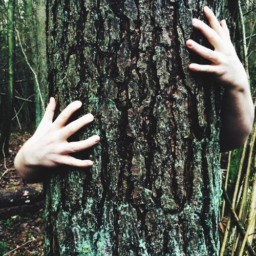 Cropped hands embracing tree