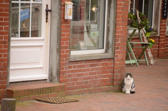One Animal Pets Door Front Door Juist Cat Domestic Cat Jw_nef First Eyeem Photo EyeEmNewHere EyeEmNewHere EyeEm Diversity