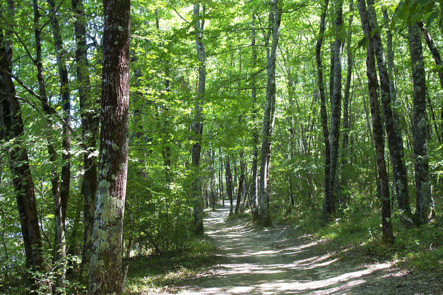 Woodland pathway Direction Forest Green Color Growth Land Nature No People Non-urban Scene Outdoors Scenics - Nature Tranquility Tree Tree Trunk Trunk WoodLand