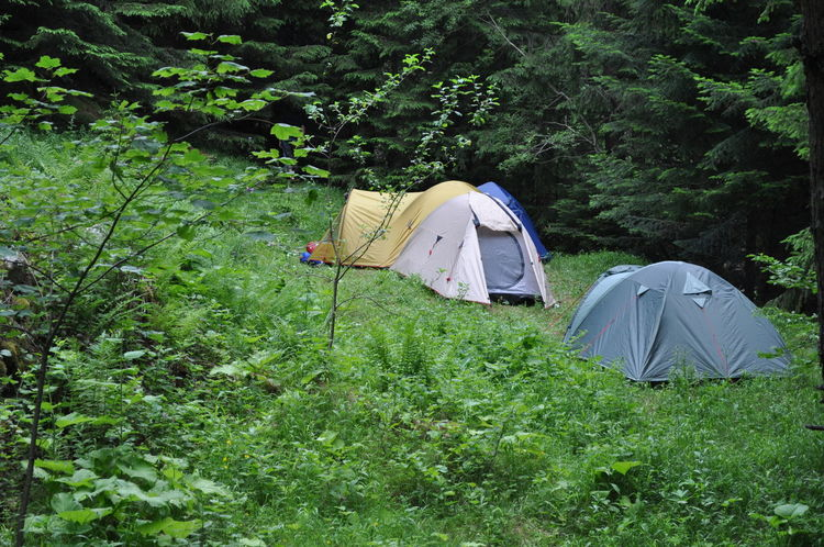 Camping in the forest near the Waterfalls Canyon. Adventure Beauty In Nature Camping Camping Camping In The Forest Camping Out Campinglife Day Field Forest Grass Green Color Growth Landscape Nature No People Outdoors Plant Shelter Tent Tent Camping Tent In Forest Tents In Forest Tree Vacations
