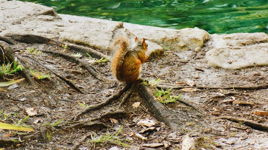 High angle view of squirrel on tree trunk