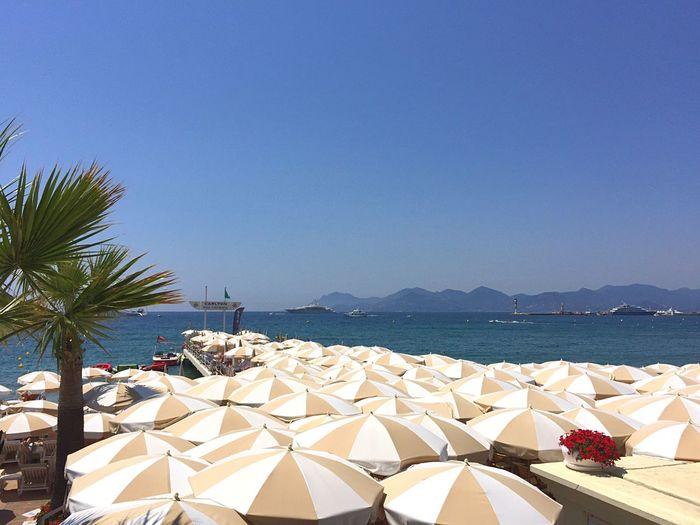 Summer Summertime Summer Views Plage Beach Mediterranean  Côte D'Azur Cannes Beach Day Beach Club Beach Umbrellas Seaside Seascape Sea Palm