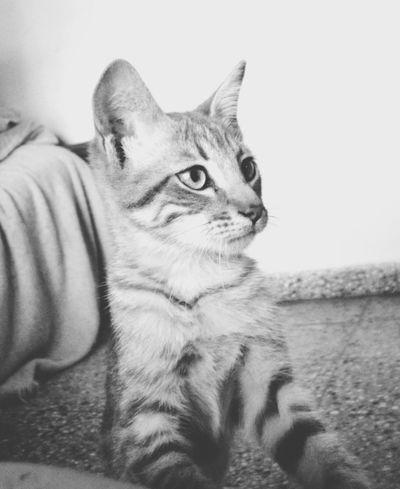 Ph Consuelo Sánchez Taking Photos Cats 🐱 Cat♡ I Love Cats Cat Lovers Catworld Lovecats❤️