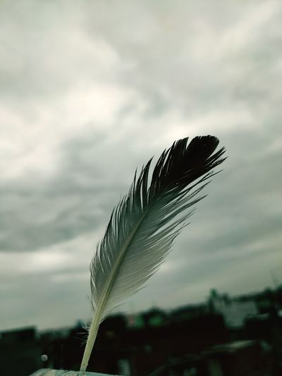 Close-up of feather against sky