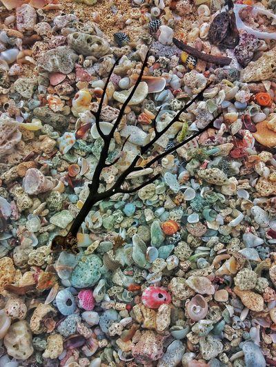 Shells Beach