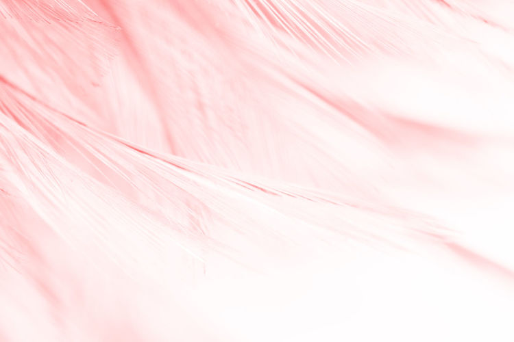 Pink Color Backgrounds Full Frame Abstract No People Textured  Softness Close-up Fragility Pastel Colored Vulnerability  Textile Extreme Close-up Abstract Backgrounds Nature Macro Pattern Indoors  Freshness White Color Flower