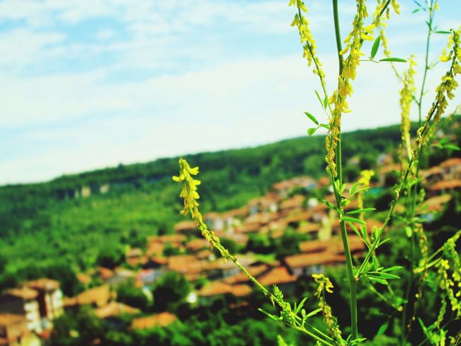 VelikoTarnovo Bulgaria Explorebulgaria Tsarevets First Eyeem Photo