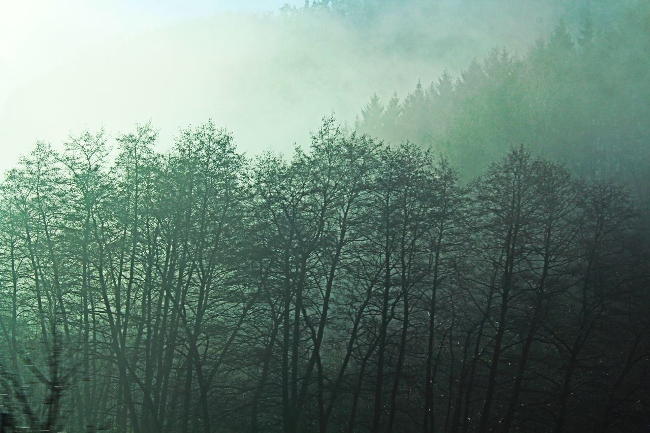 tree, nature, fog, no people, tranquility, mist, outdoors, beauty in nature, tranquil scene, day, hazy, growth, forest, landscape, scenics, sky