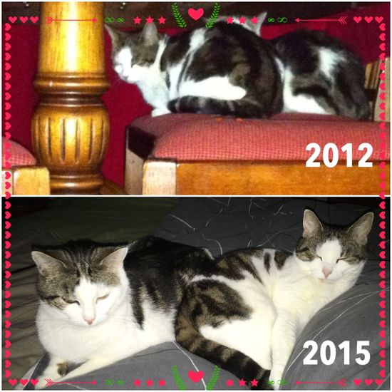 2012 My newly adopted cats hid under the table. 2015 they try to sleep in the same cozy-friendly spot in My bed. Adoption Cat Shy Bewildered Giveloveachance