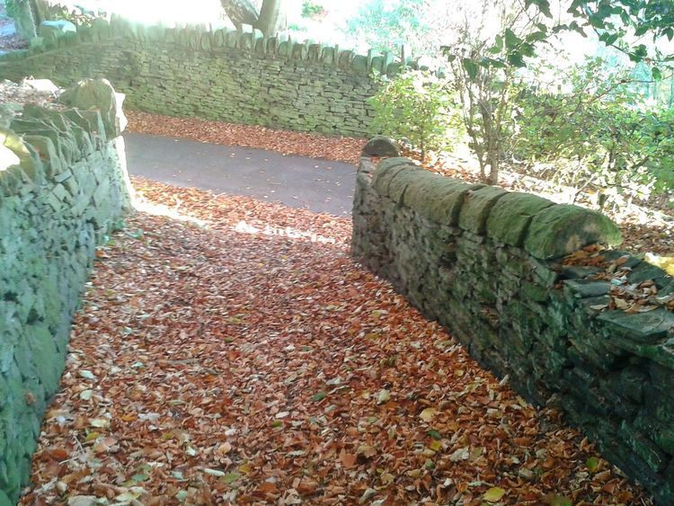 Autumnbeauty Autumn Leaves Drystonewalls Autumnleaves Autumnbeauty Pathway Scenics Pathways Tranquility Tranquil Scene Sunlight Shadow Beauty In Nature Autumn Leaves No People Nature