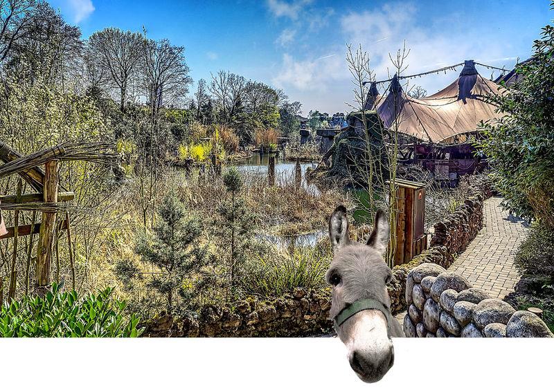 Amusementpark Beauty In Nature Hdrphotography Nature Outdoors Phantasialand Photomontage Pretpark Sky Tree