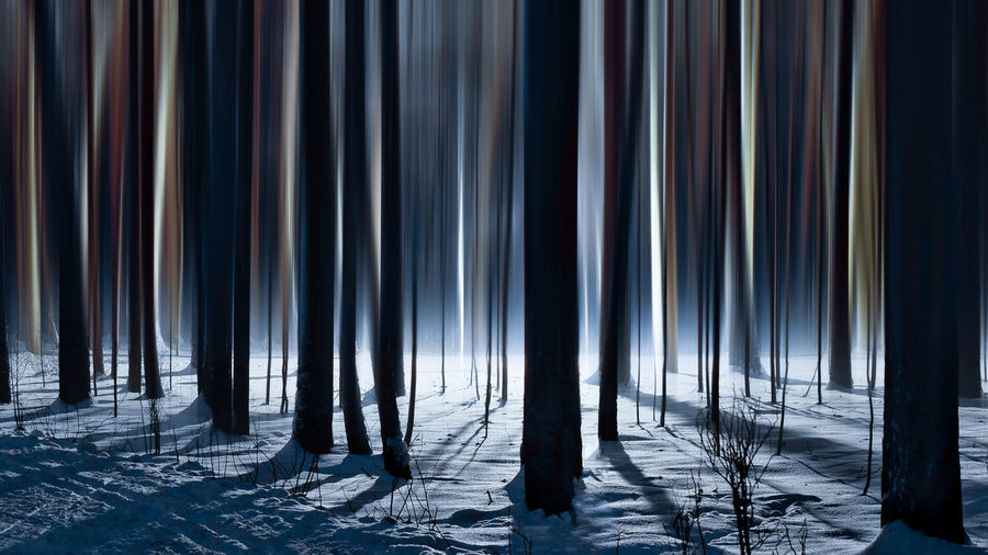 Trees growing in forest during winter