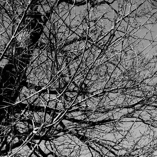 Branching out!! Treelife Inthewoods Naturesway blackandwhite Winteriness Followback