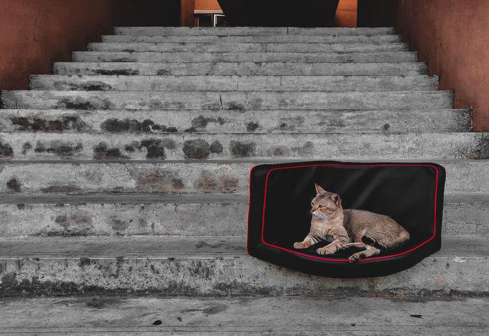 Urban cat Cat Stairs Animal Oneplus6 Shotononeplus Love Animals Love Cat Pets