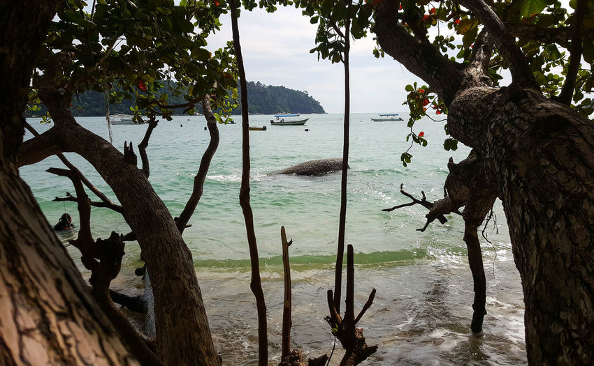 'Lifts you up like a child, or drags you down like a stone. To consume you until you choose to let this go.' ~Tool Tree Nature Water Tree Trunk Beauty In Nature Been There. Done That. Nature Rewilding Beach Summer Silhouette Outdoors Boat Islandlife Malaysia Pangkor Perak