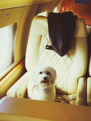 Holidays ☀ IPhoneography Ilovemydog Myprincess🐶🐶 Isis😍