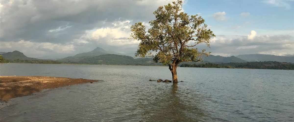 peacefull place Tree Horizon Over Water Simple Wonderful Indonesia Sulawesi Celebes Wonderful Day Water Beauty In Nature Cloud - Sky Sky Tranquil Scene Tranquility Tree Scenics - Nature Mountain Nature Plant Day Lake No People Mountain Range Waterfront Outdoors Non-urban Scene