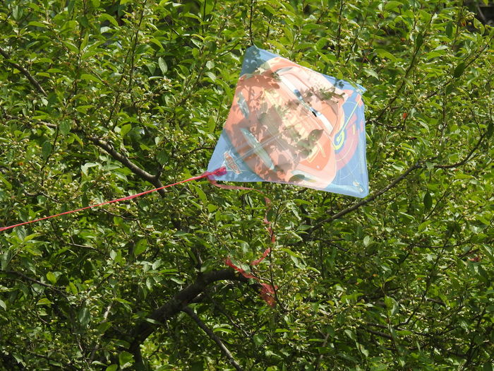 Kite Kite In Tree Kites Sad Day Childs Toy Close-up Growth No People Outdoors Tree