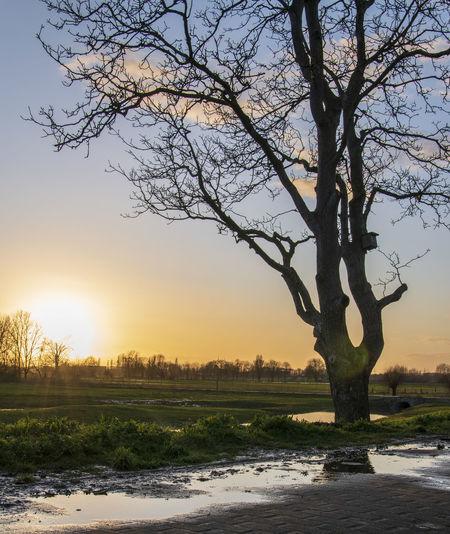 Bare tree on landscape against sky during sunset