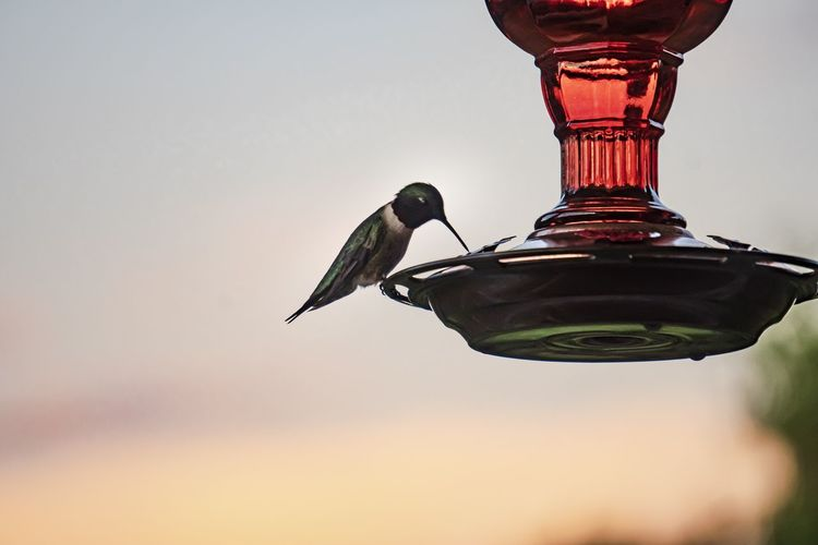 Low angle view of bird perching on feeder