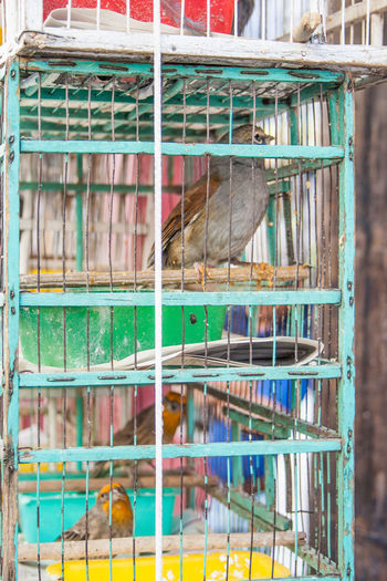 Animal Themes Animal Cage Vertebrate One Animal Mammal Animals In Captivity No People Birdcage Bird Animal Wildlife Domestic Pets Domestic Animals Day Close-up Architecture Trapped Outdoors Metal