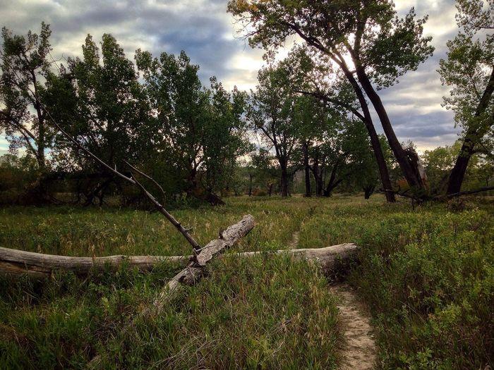 Alberta Alberta Canada Lethbridge Lethbridge, Alberta Tree Plains Prairies Prairie Scenes Floodplain Canada Southern Alberta Tallgrass Tall Grass