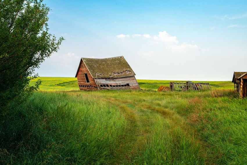 Abandoned Homestead Architecture Beauty In Nature Building Exterior Built Structure Cloud - Sky Day Environment Field Grass Green Color Growth Land Landscape Nature No People Non-urban Scene Outdoors Plant Ruined Sky Tranquility Tree