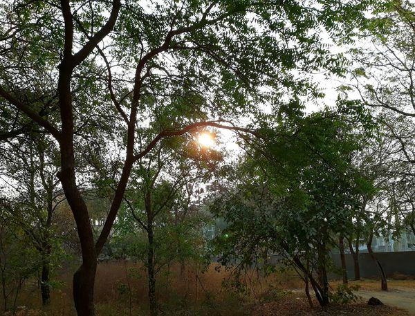 sunrise Low Angle View Nature Growth Beauty In Nature Sky